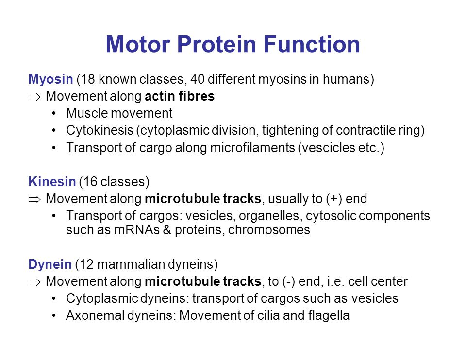 Motor Protein Function