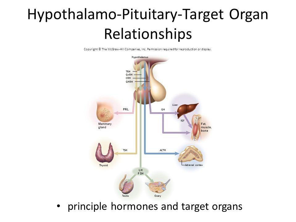 Hypothalamo-Pituitary-Target Organ Relationships