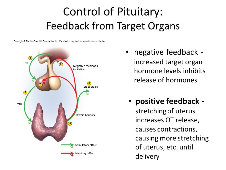 Control of Pituitary: Feedback from Target Organs