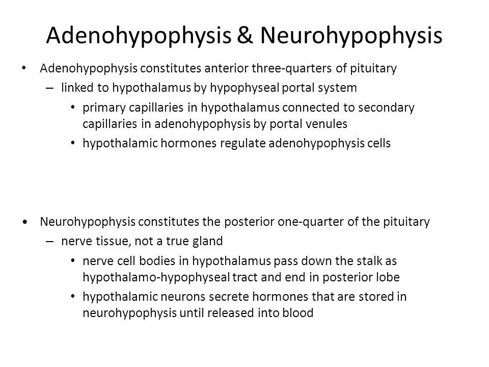 Adenohypophysis & Neurohypophysis