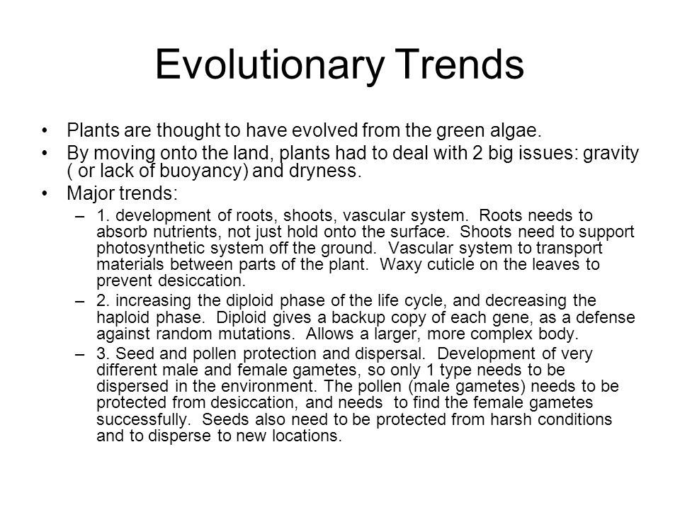 Evolutionary Trends Plants are thought to have evolved from the green algae.