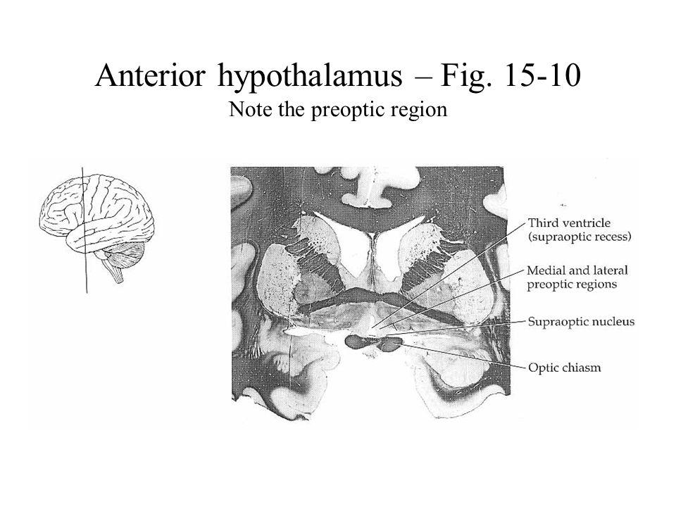 Anterior hypothalamus – Fig. 15-10 Note the preoptic region