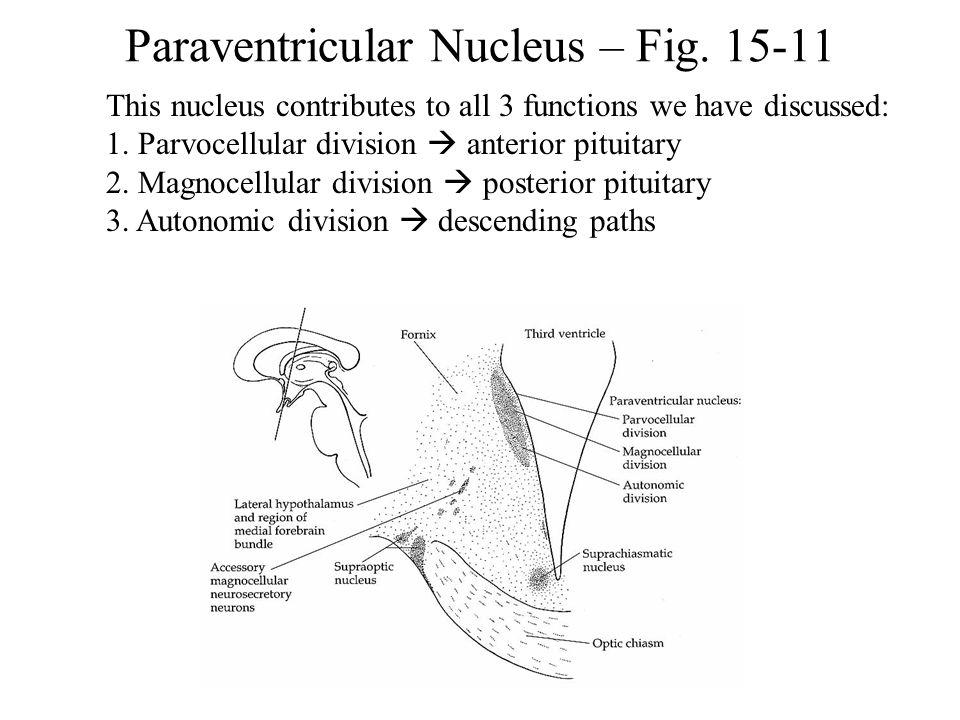 Paraventricular Nucleus – Fig. 15-11