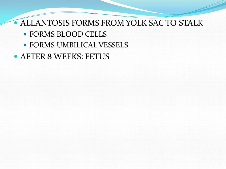 ALLANTOSIS FORMS FROM YOLK SAC TO STALK