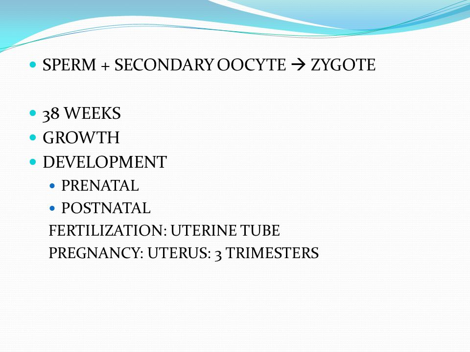 SPERM + SECONDARY OOCYTE  ZYGOTE 38 WEEKS GROWTH DEVELOPMENT