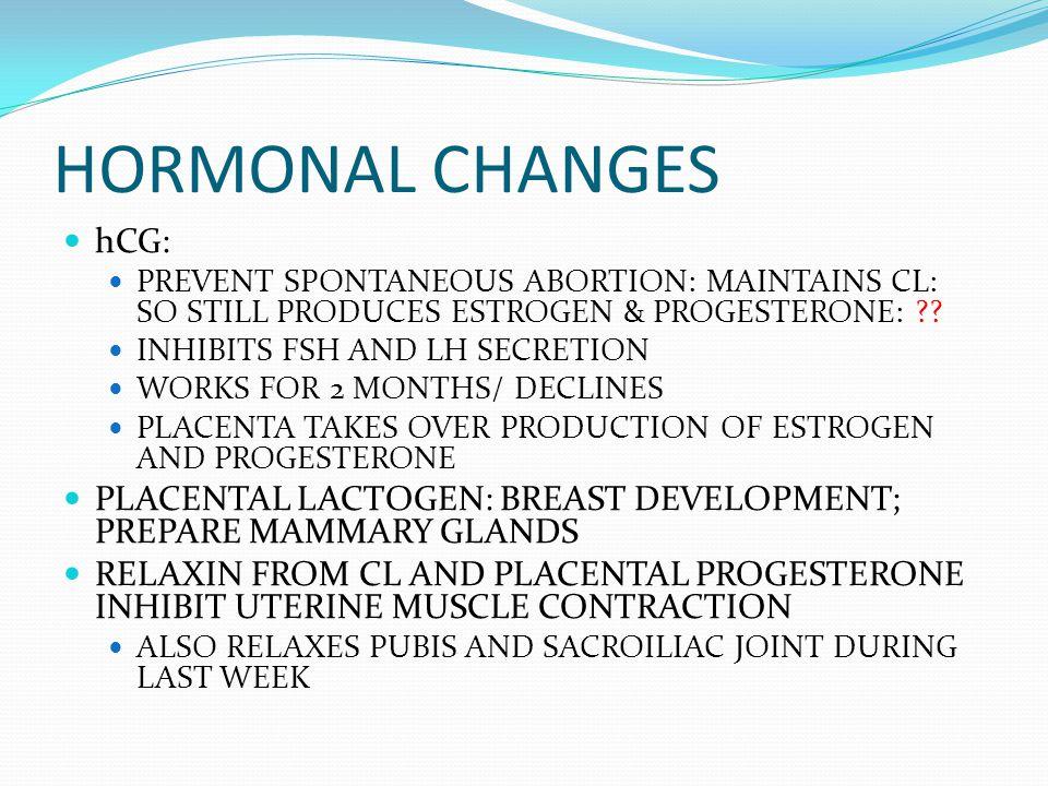 HORMONAL CHANGES hCG: PREVENT SPONTANEOUS ABORTION: MAINTAINS CL: SO STILL PRODUCES ESTROGEN & PROGESTERONE: