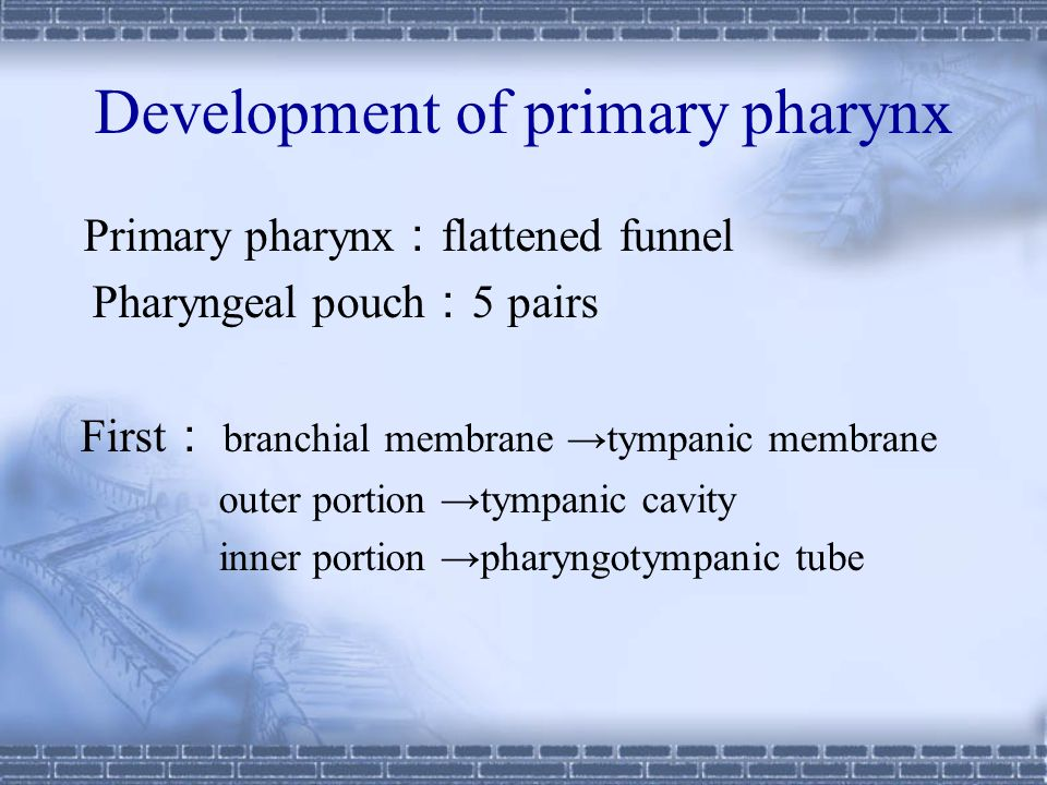 Development of primary pharynx