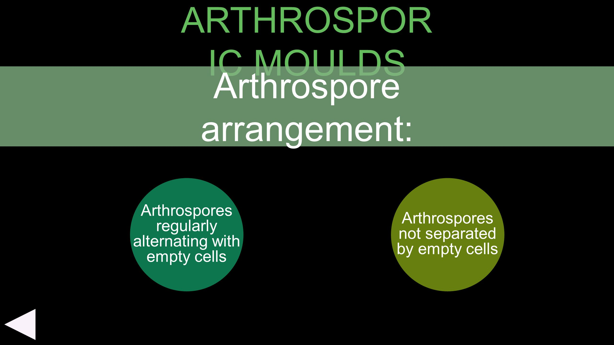 Arthrospore arrangement: