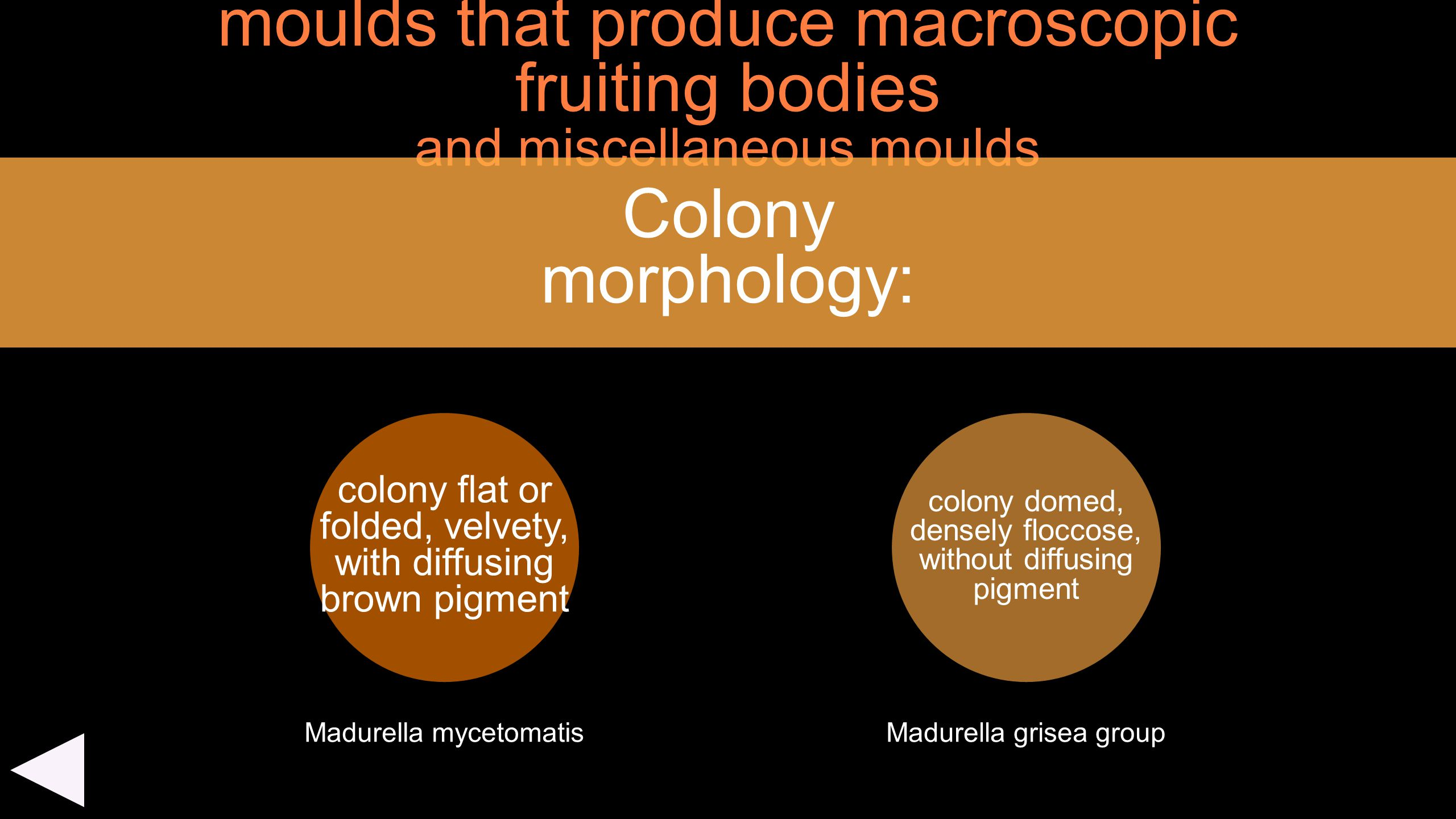 moulds that produce macroscopic fruiting bodies