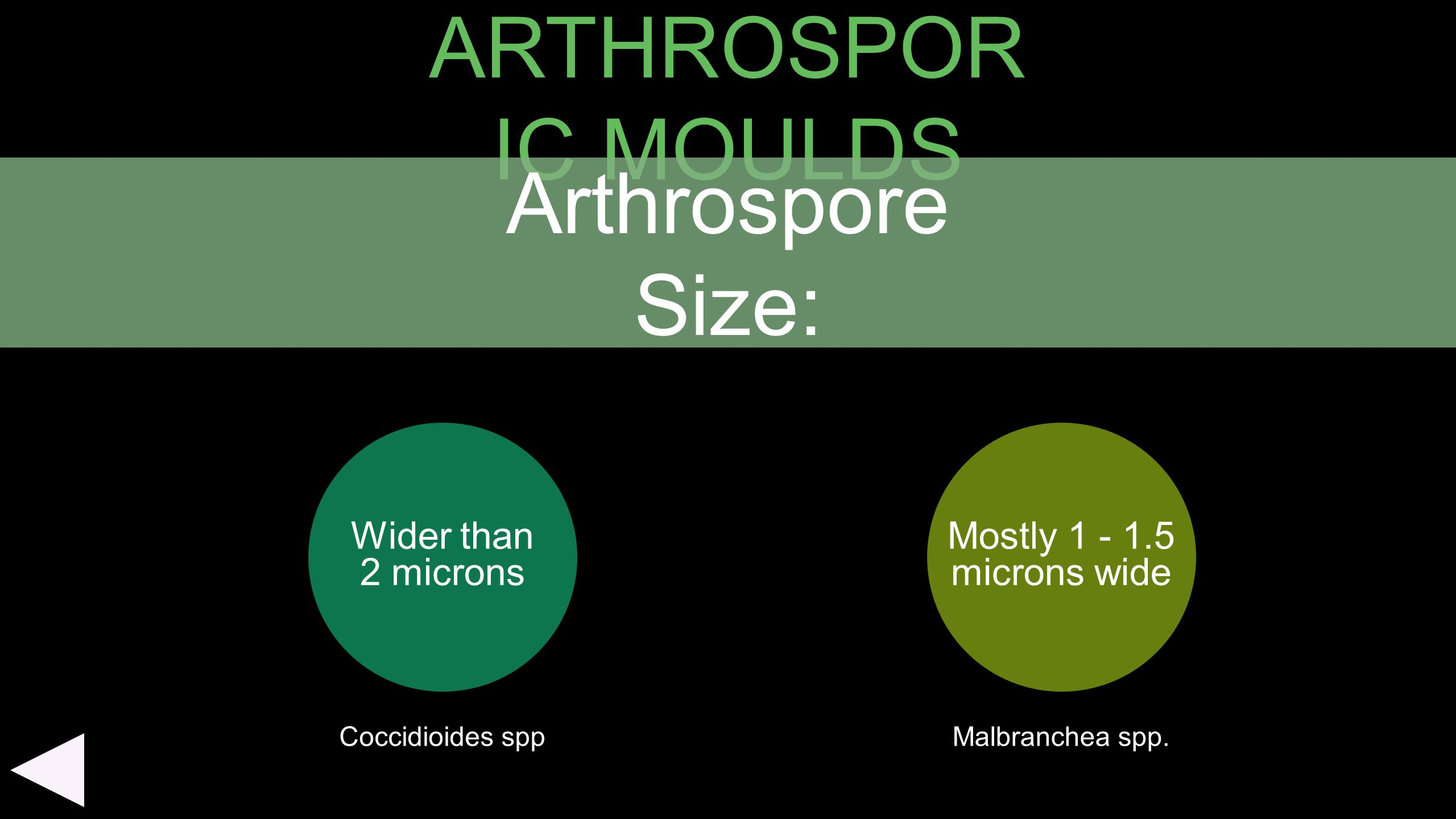 ARTHROSPORIC MOULDS Arthrospore Size: Wider than 2 microns