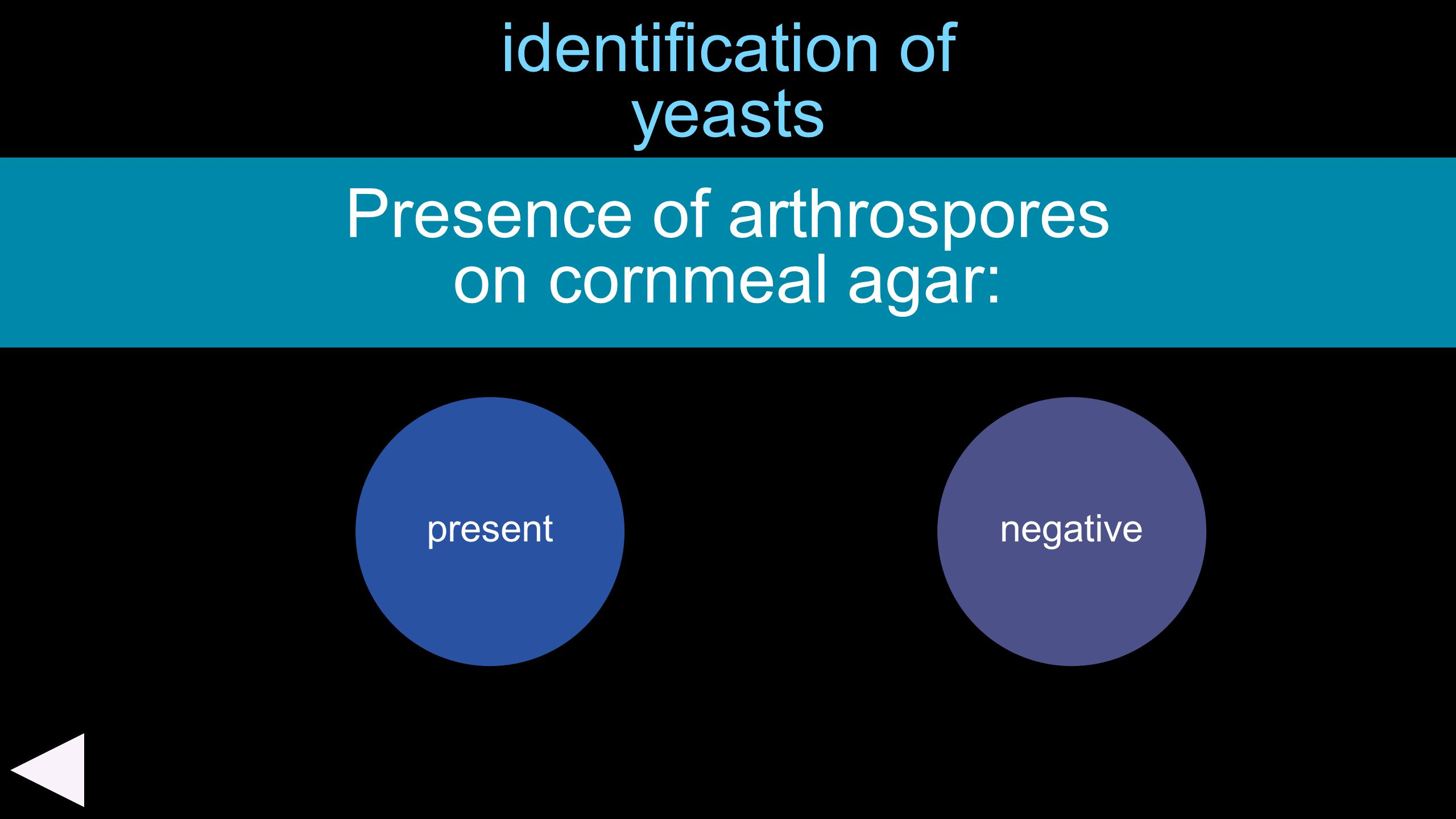 identification of yeasts