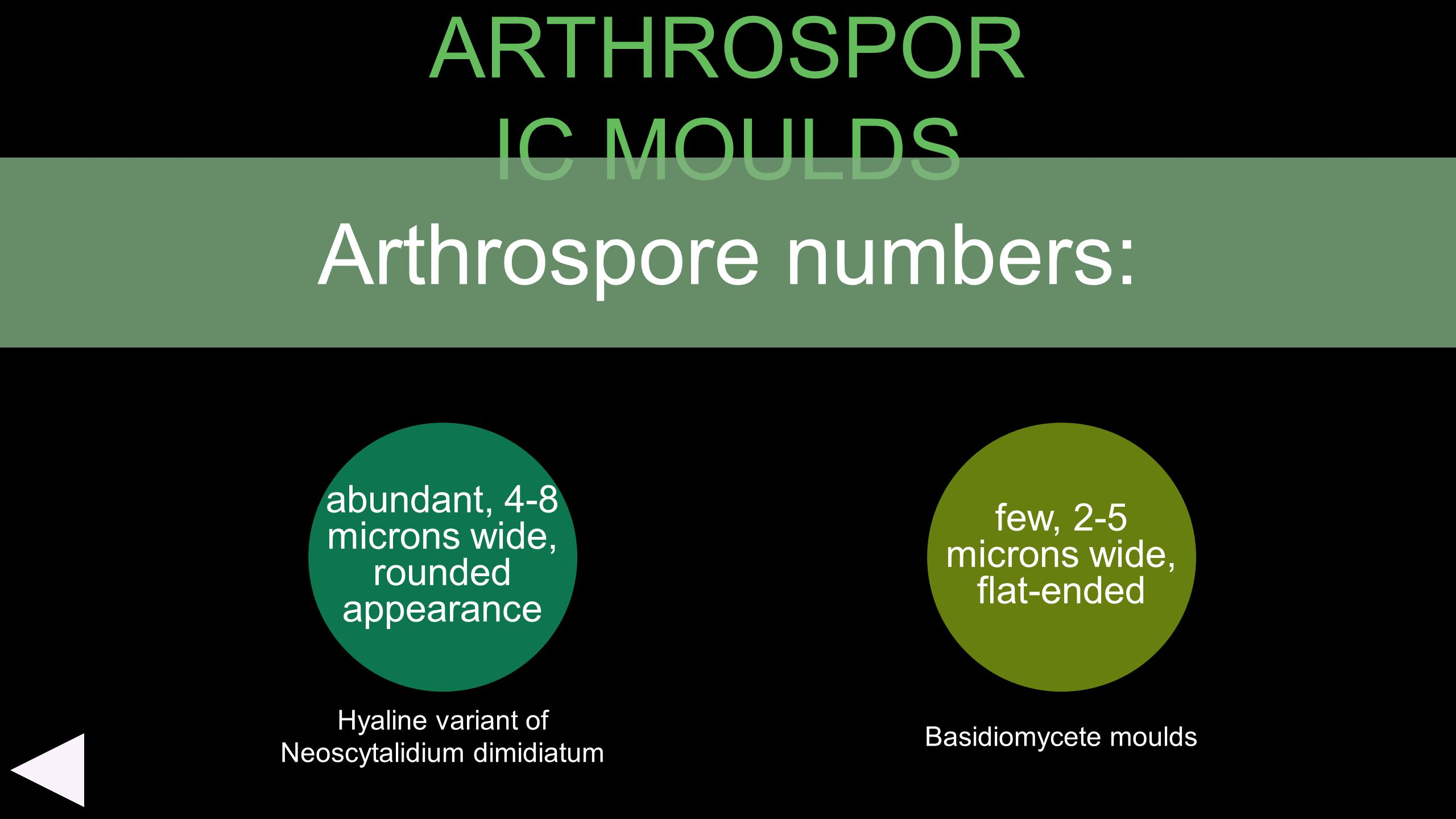 ARTHROSPORIC MOULDS Arthrospore numbers: