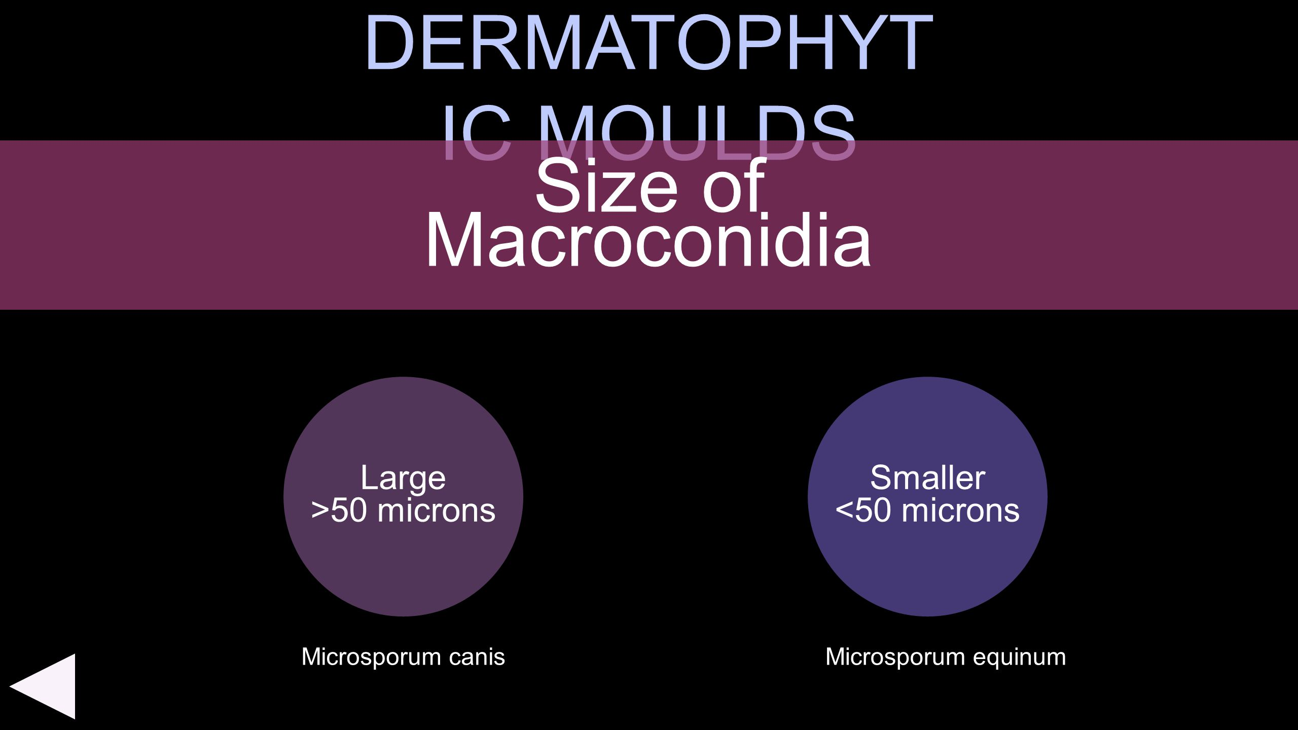 DERMATOPHYTIC MOULDS Size of Macroconidia Large >50 microns Smaller
