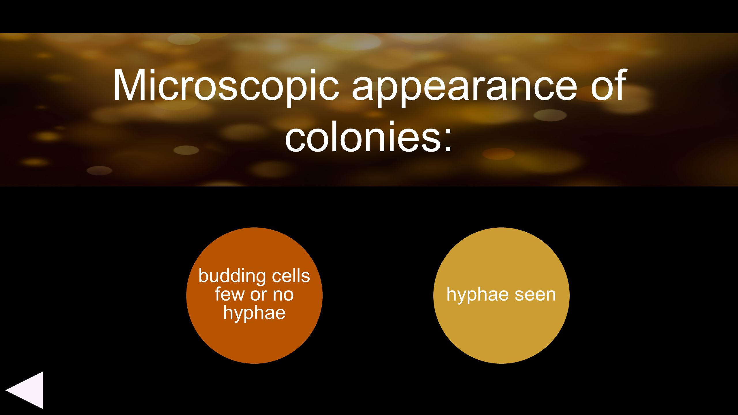 Microscopic appearance of colonies: