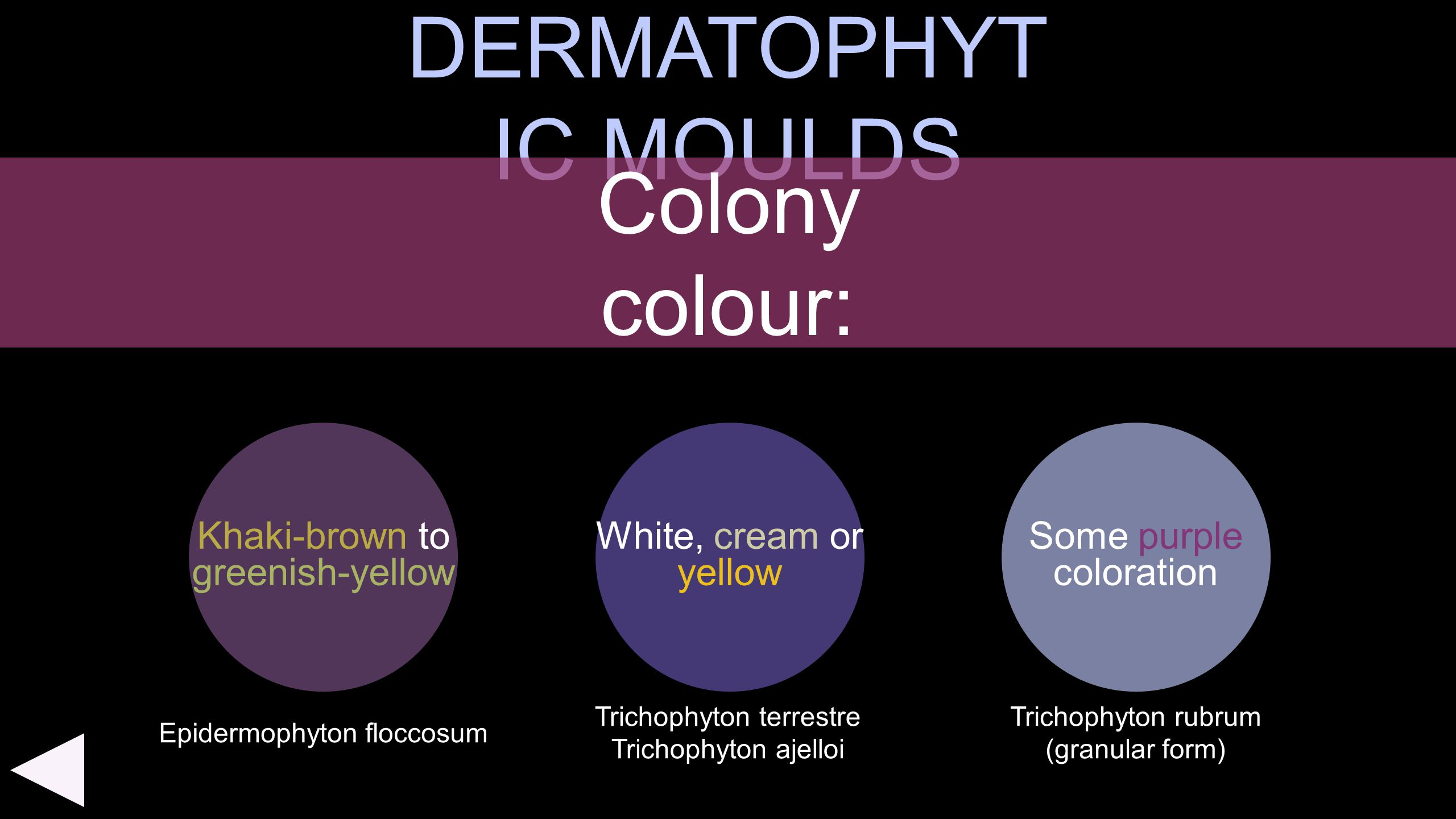 DERMATOPHYTIC MOULDS Colony colour: Khaki-brown to greenish-yellow