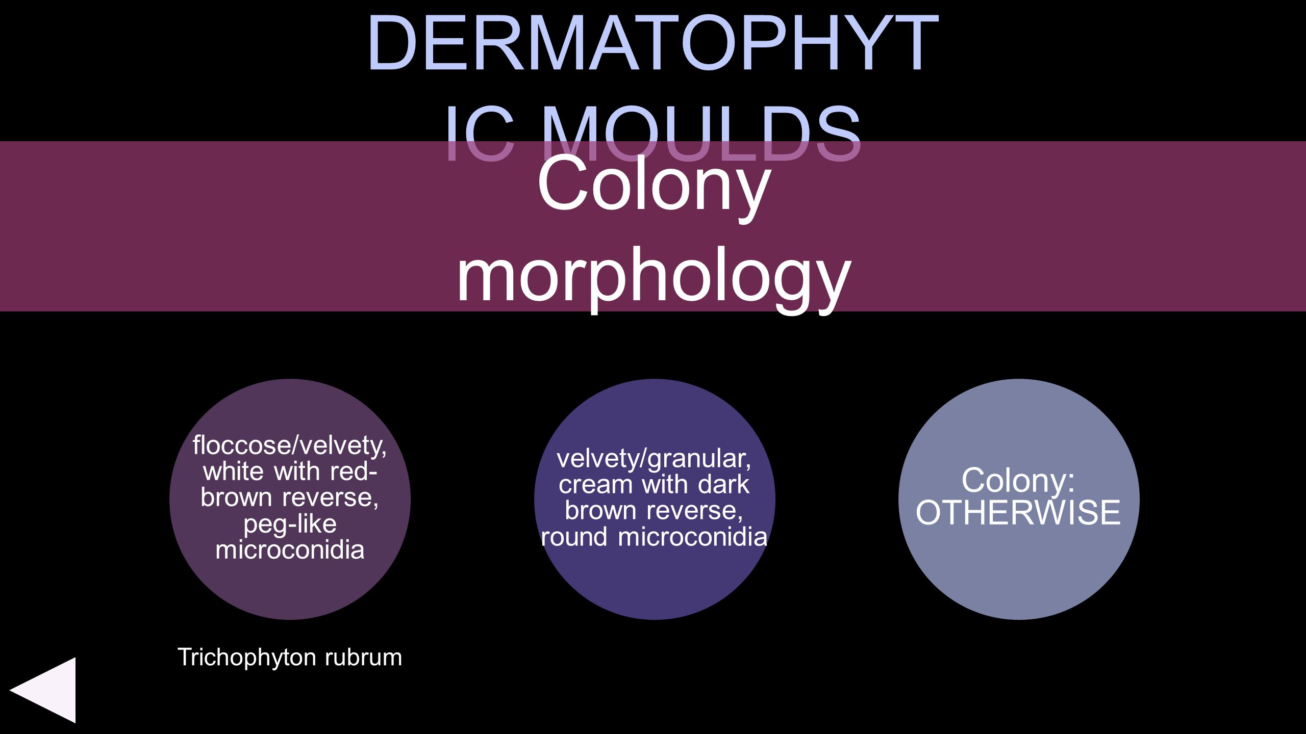 DERMATOPHYTIC MOULDS Colony morphology Colony: OTHERWISE