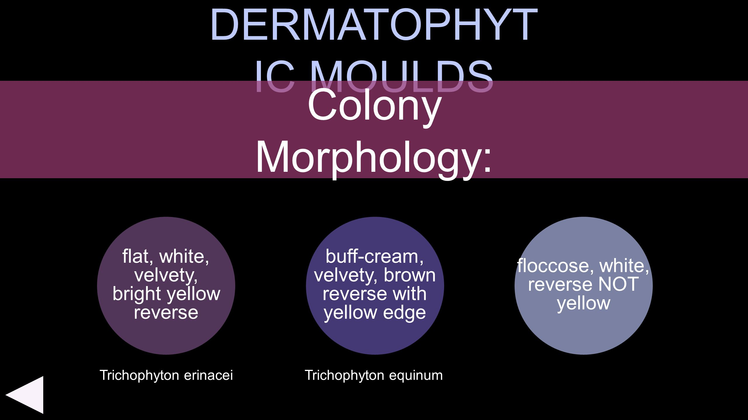 DERMATOPHYTIC MOULDS Colony Morphology: flat, white, velvety,