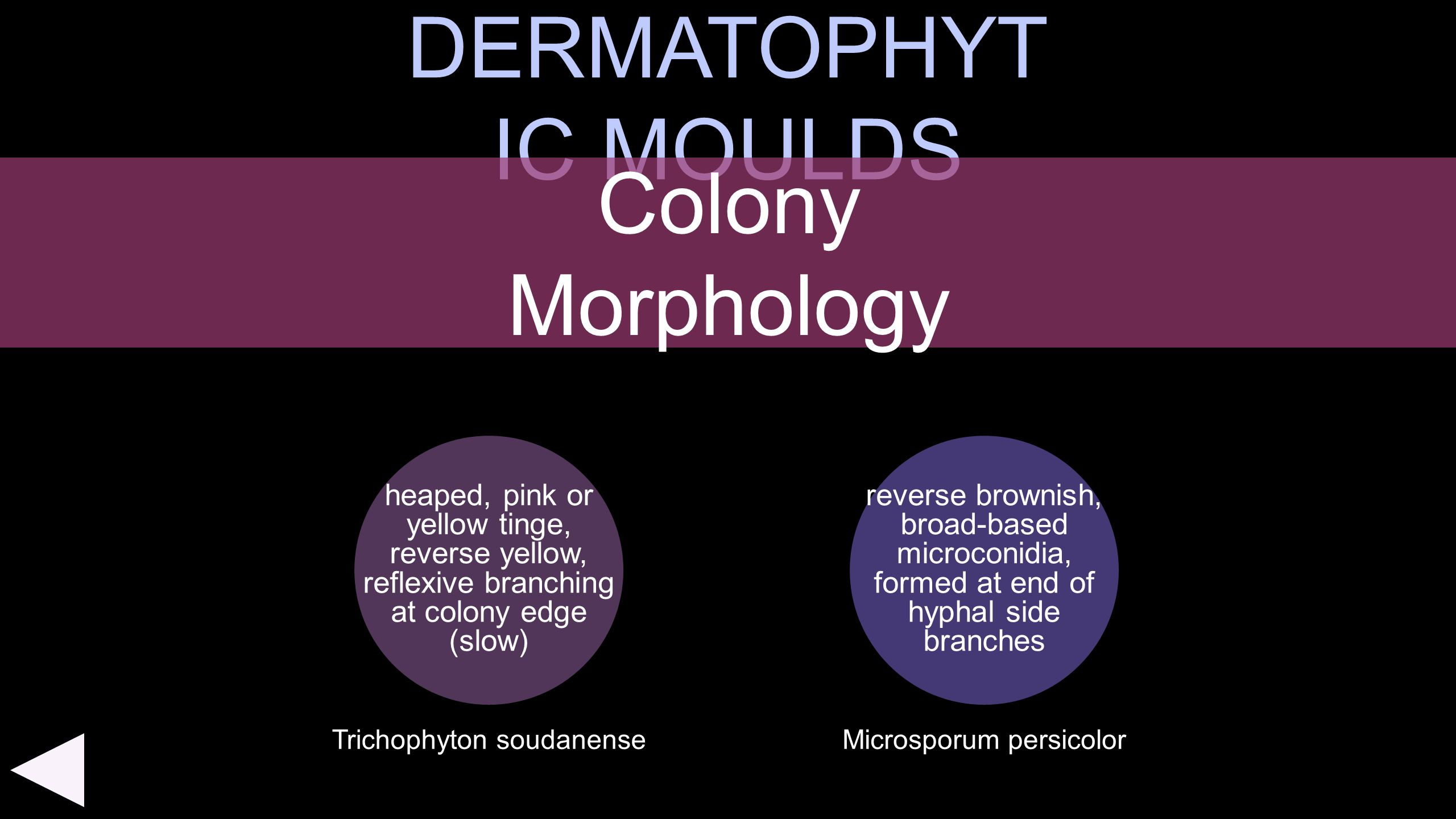 DERMATOPHYTIC MOULDS Colony Morphology