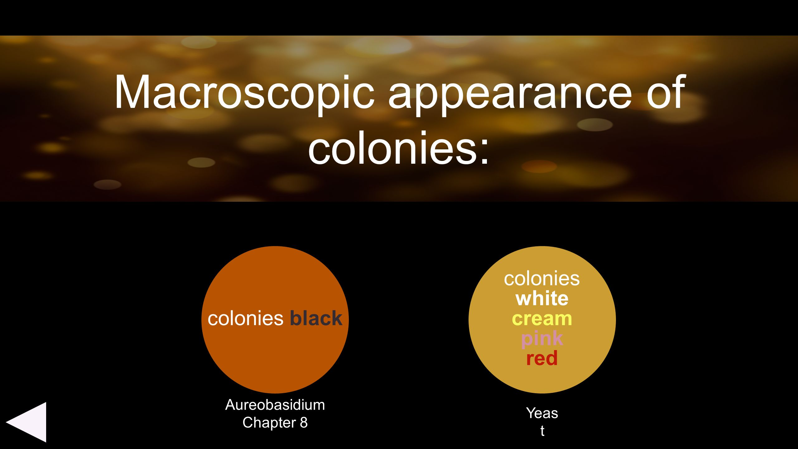 Macroscopic appearance of colonies: