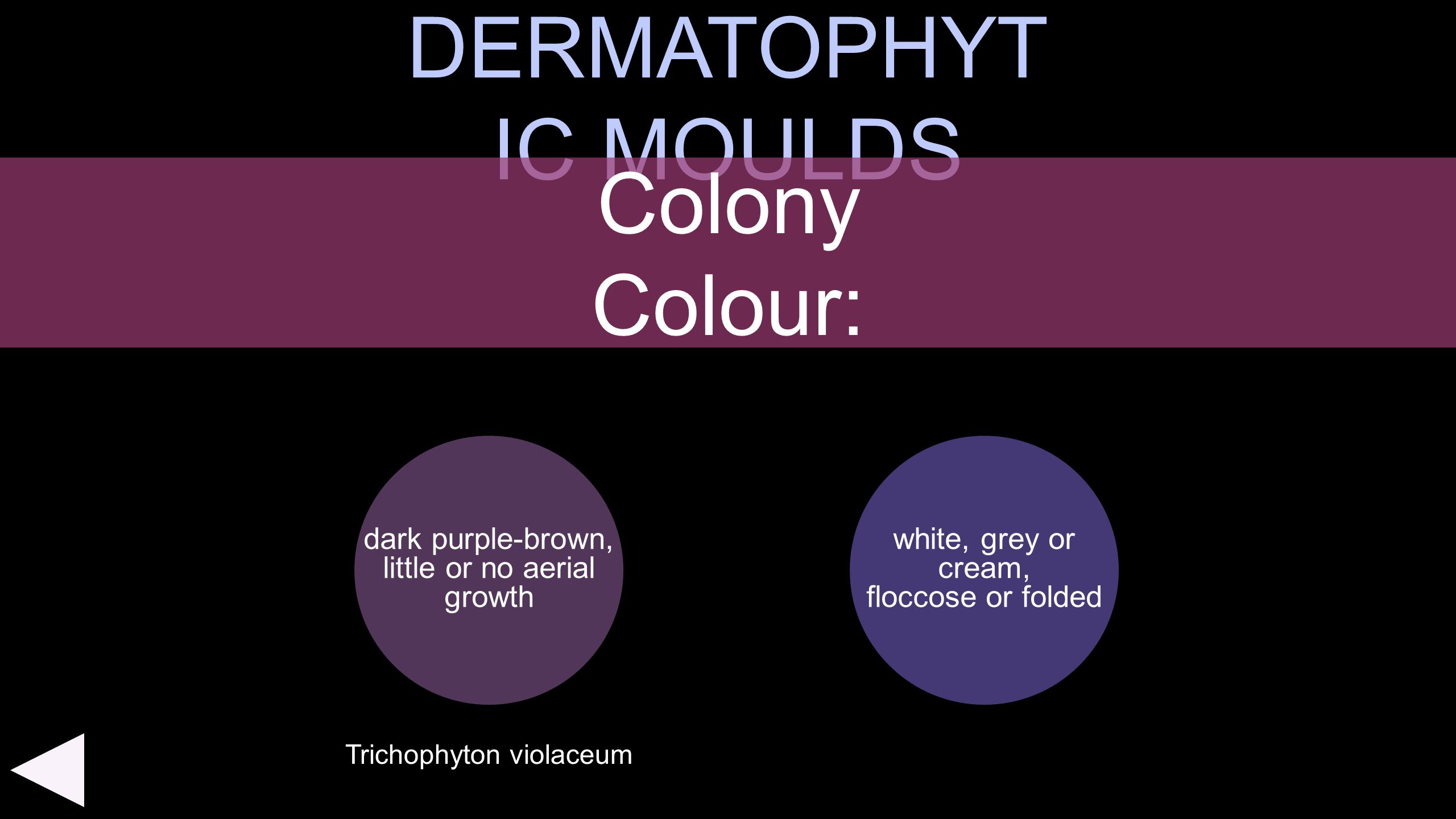 DERMATOPHYTIC MOULDS Colony Colour: dark purple-brown,