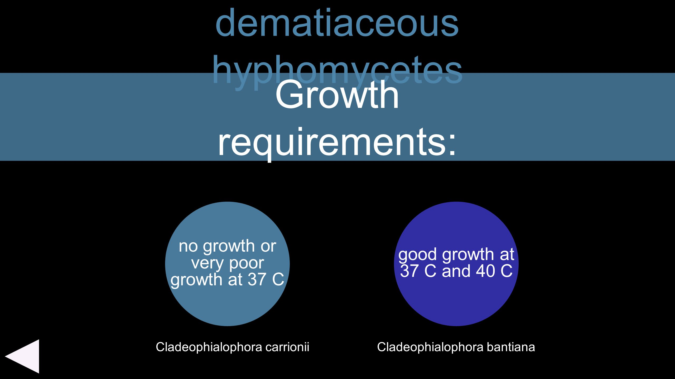 dematiaceous hyphomycetes