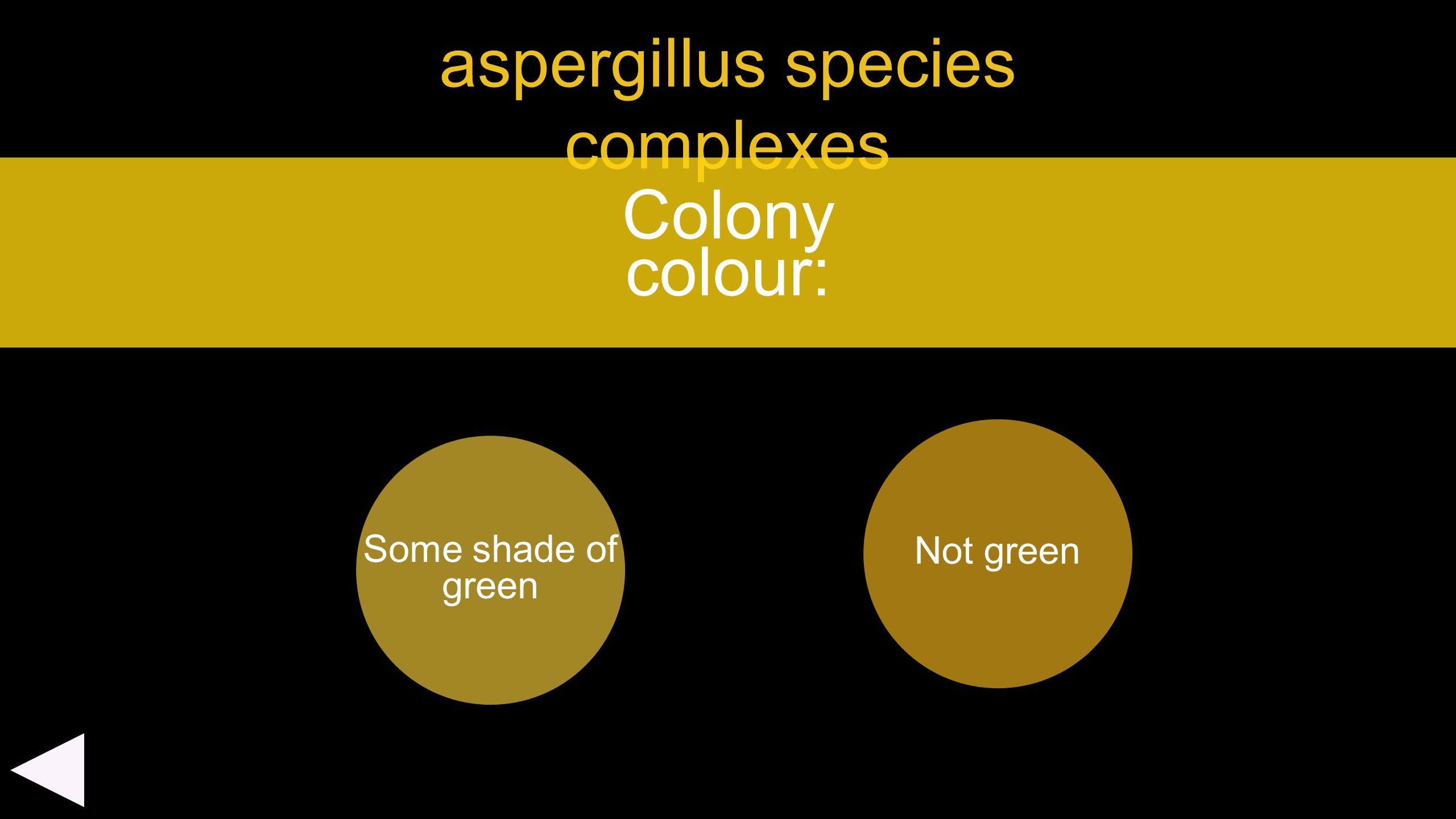 aspergillus species complexes