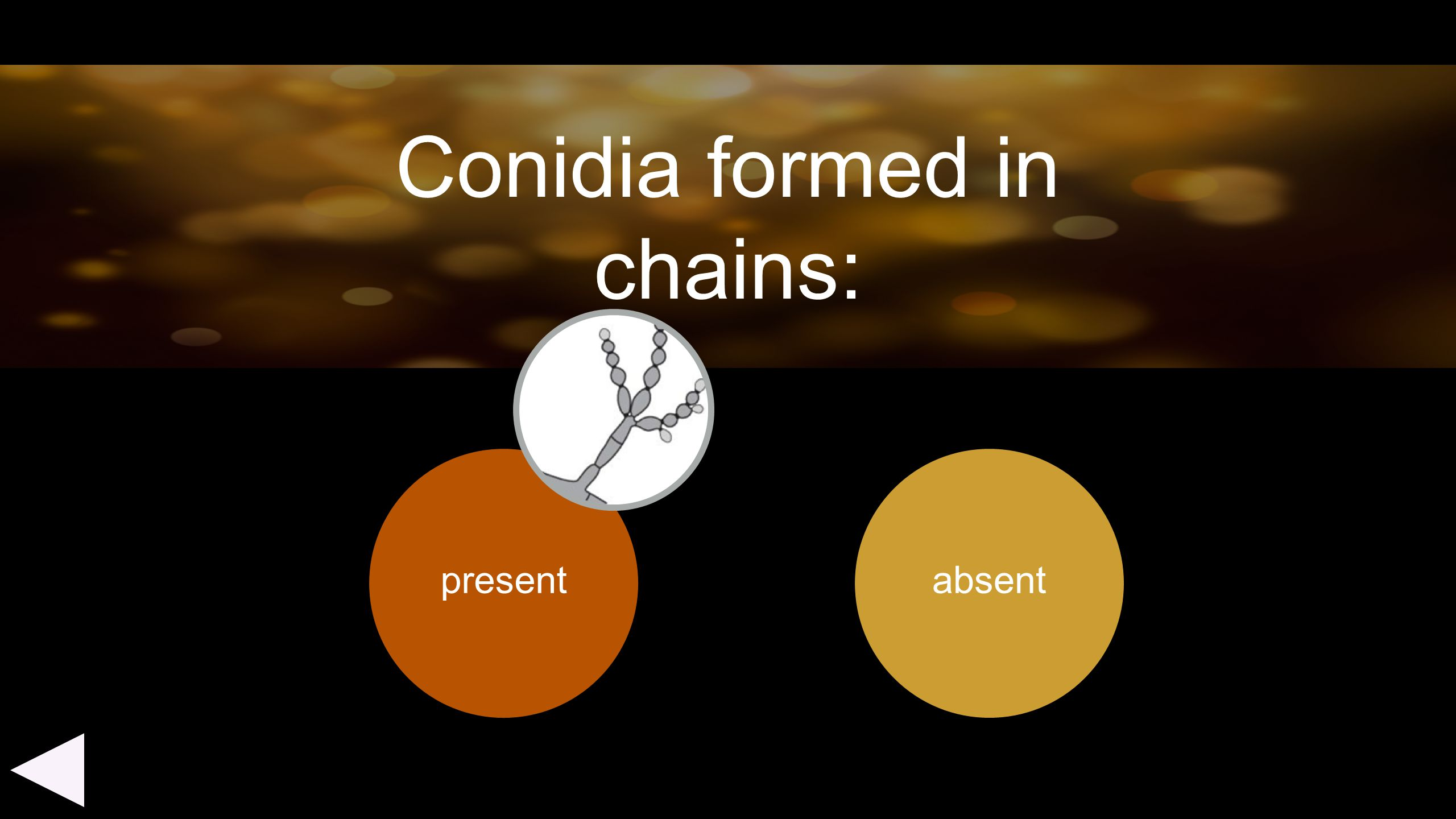 Conidia formed in chains: