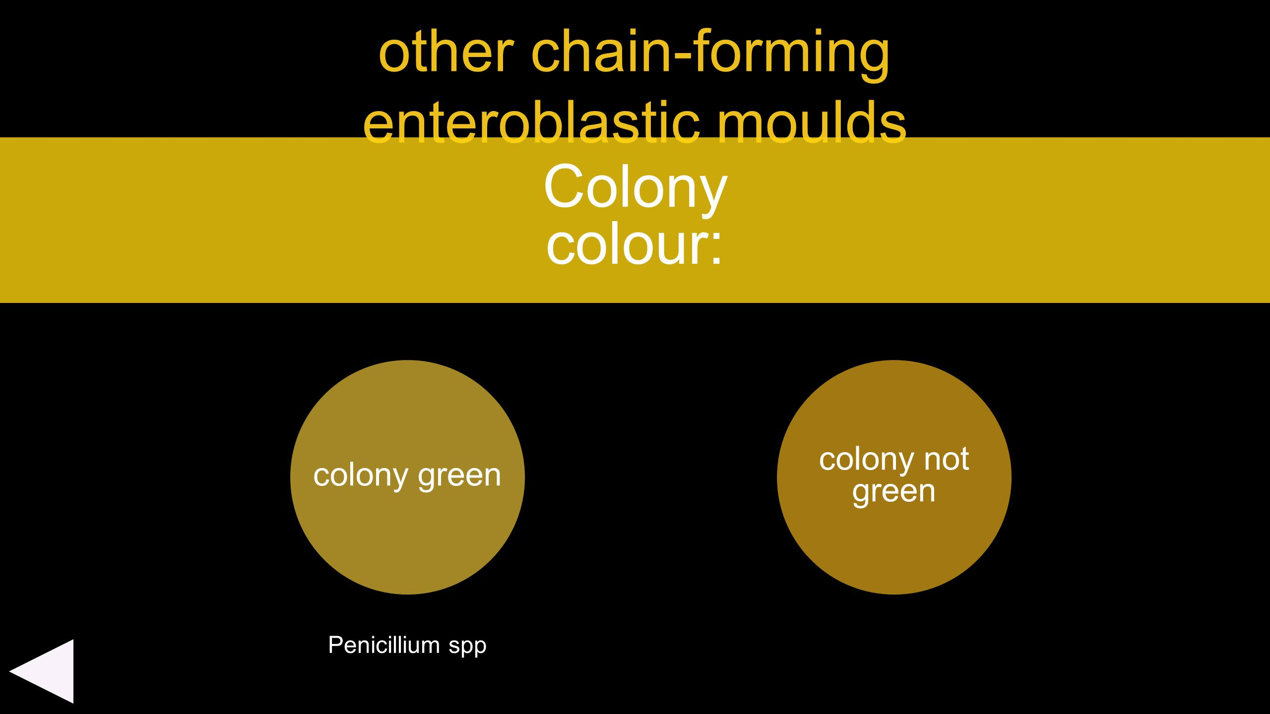 other chain-forming enteroblastic moulds