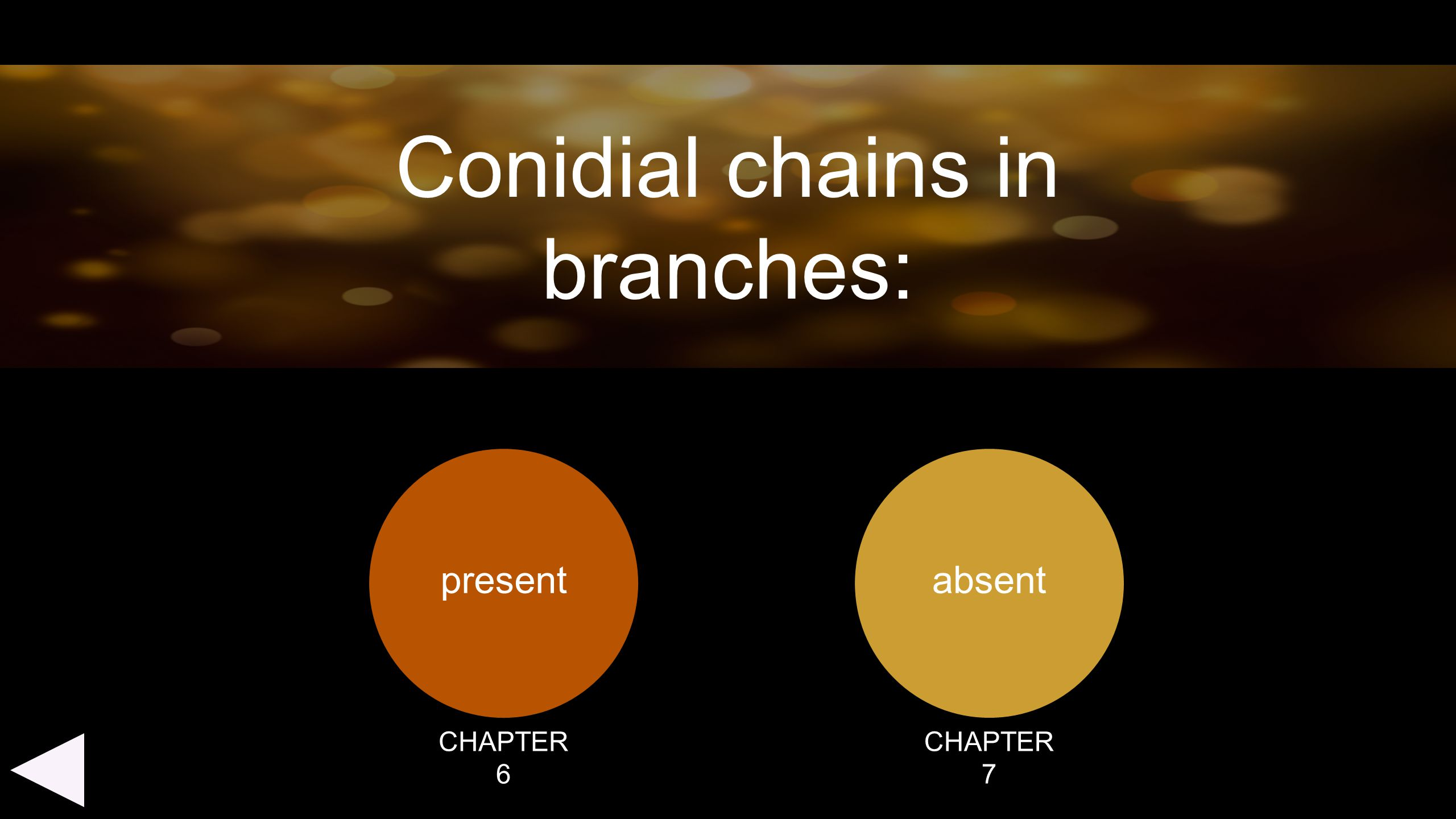 Conidial chains in branches: