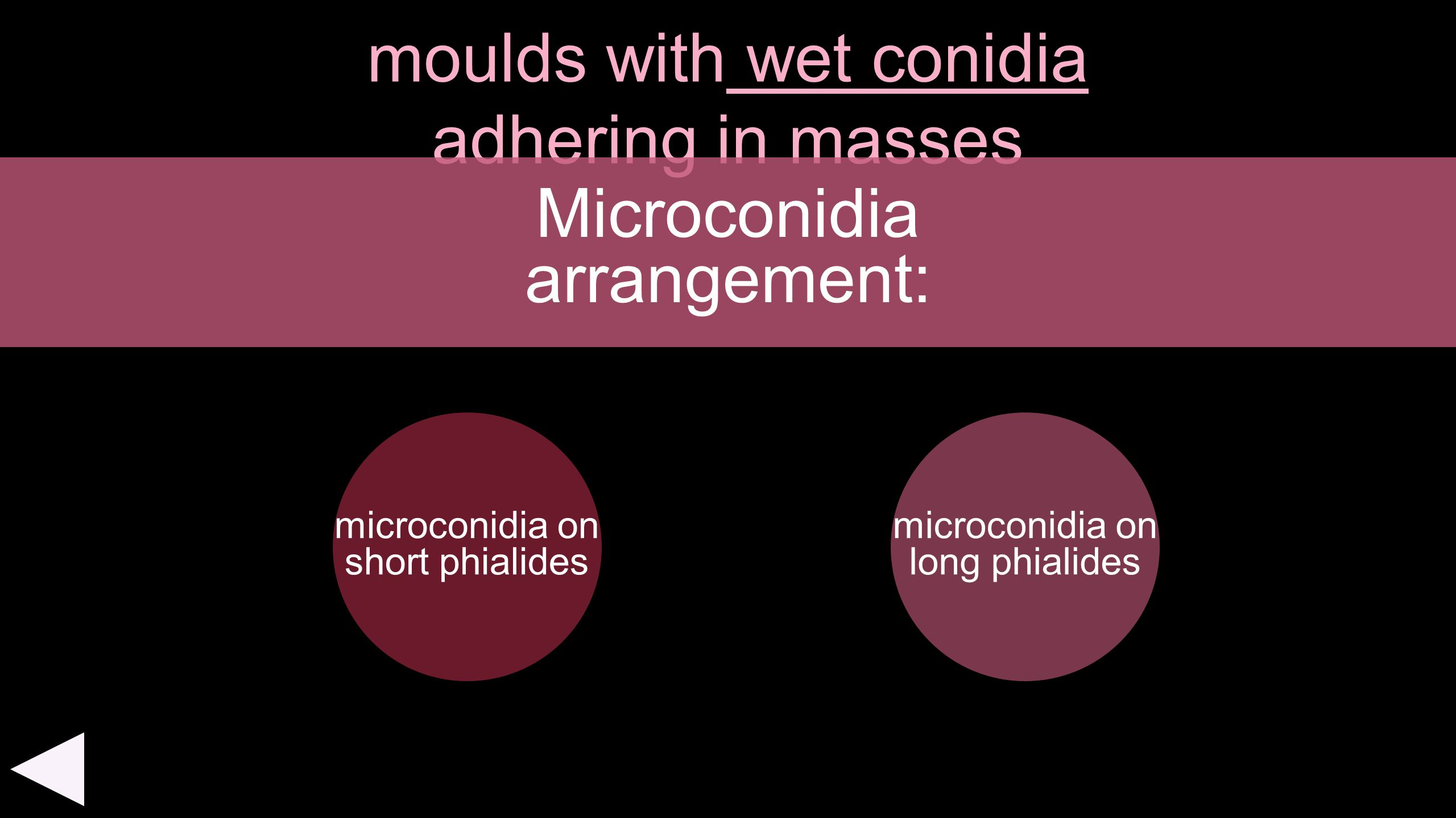 moulds with wet conidia adhering in masses