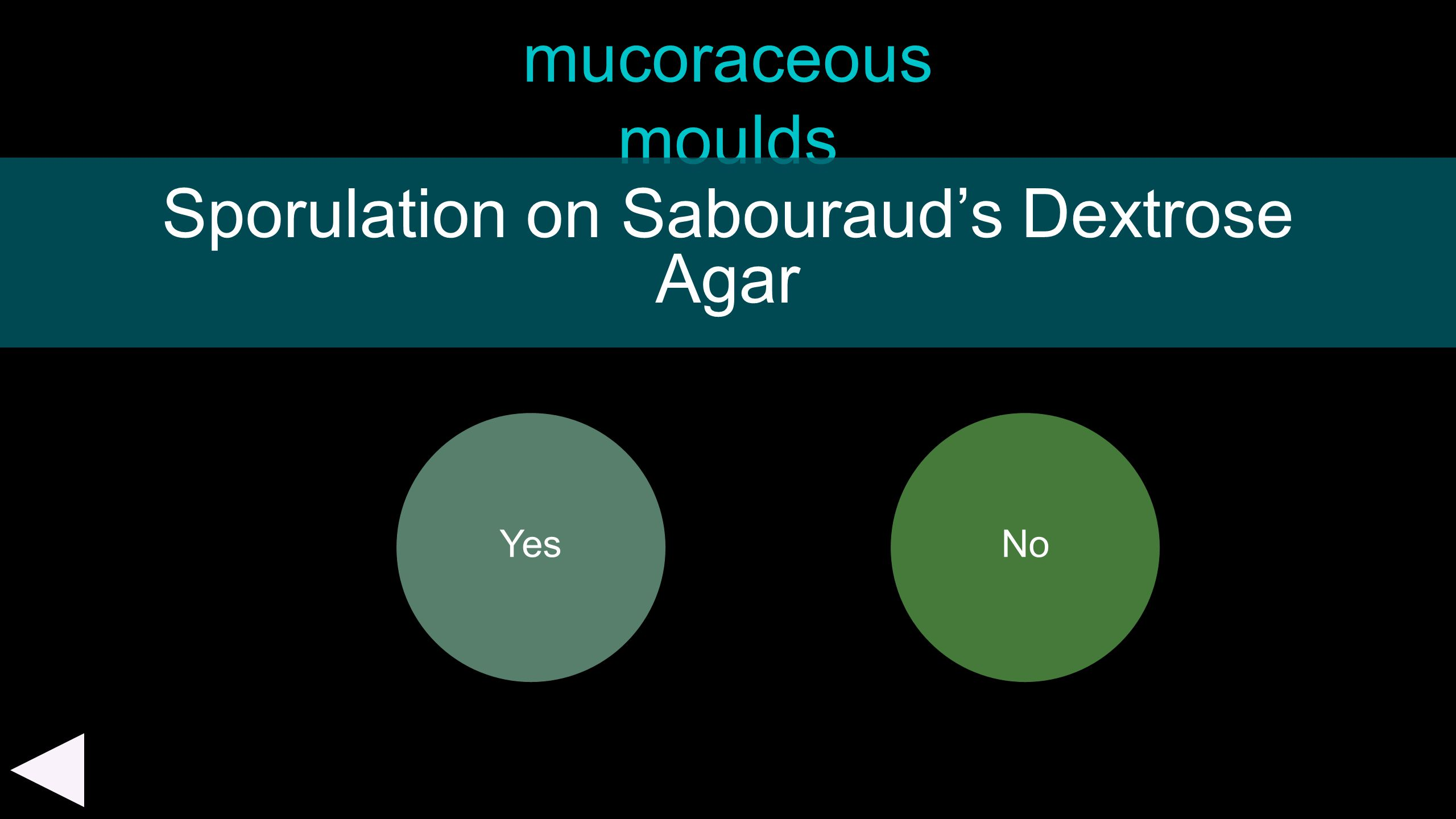 Sporulation on Sabouraud's Dextrose Agar