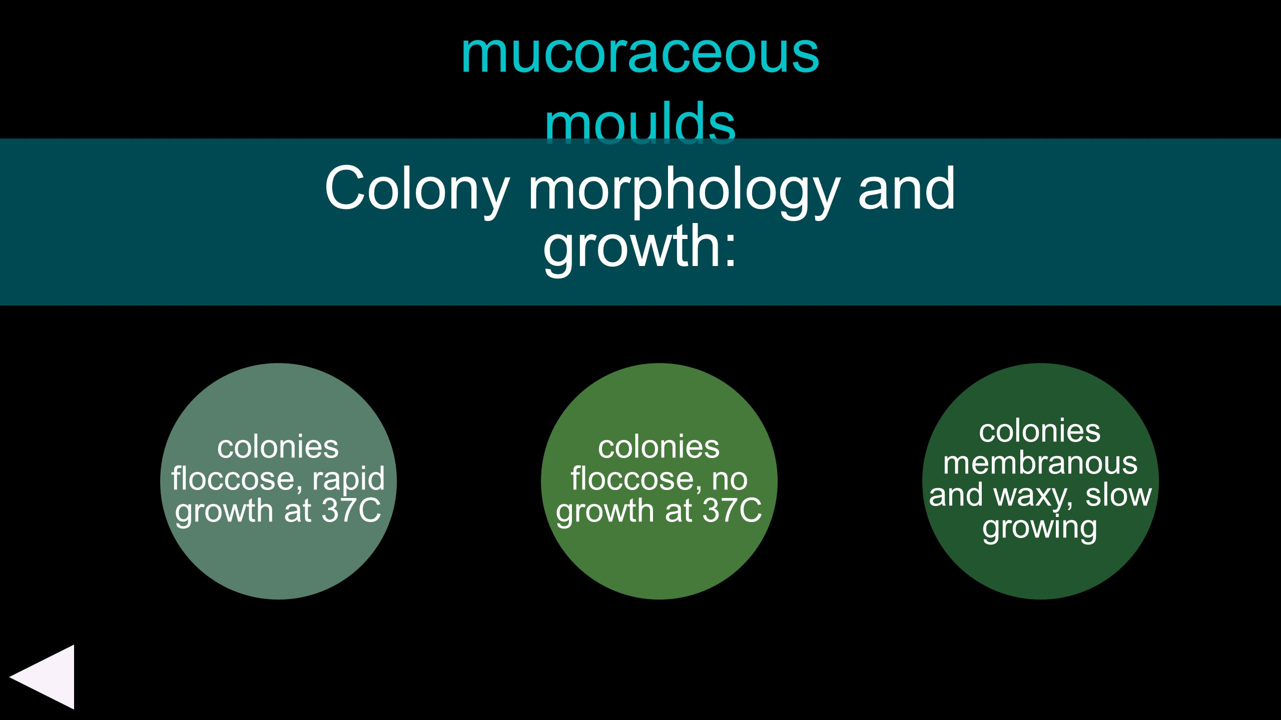 Colony morphology and growth: