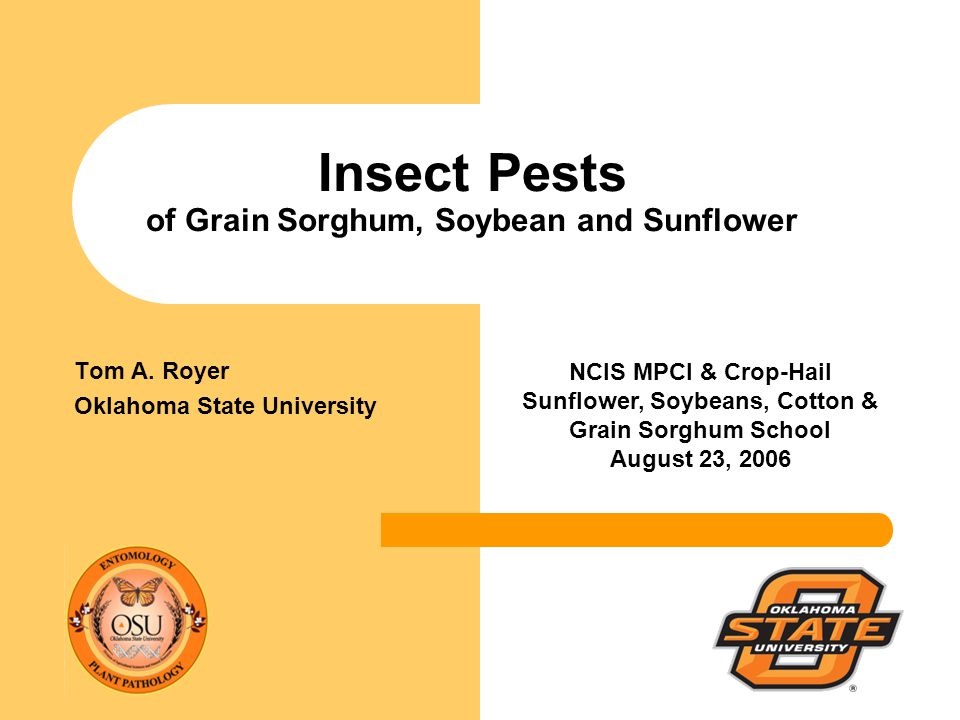 Insect Pests of Grain Sorghum, Soybean and Sunflower