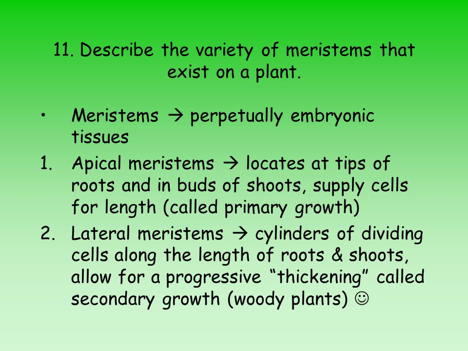 11. Describe the variety of meristems that exist on a plant.