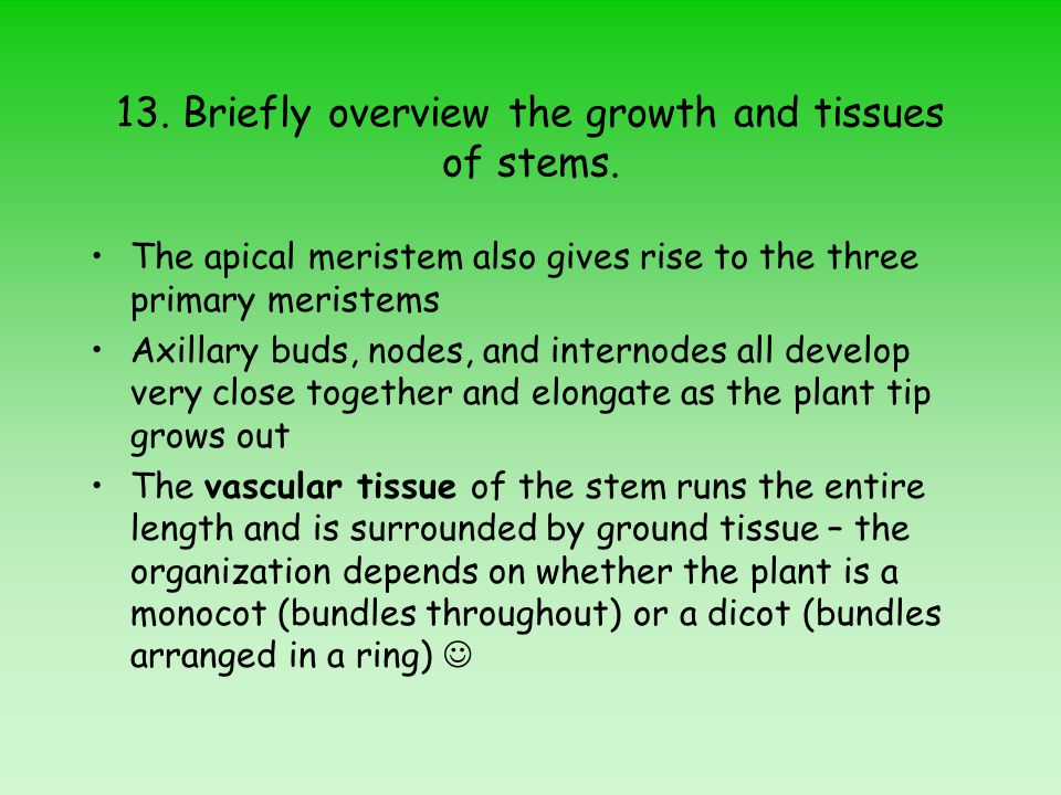 13. Briefly overview the growth and tissues of stems.