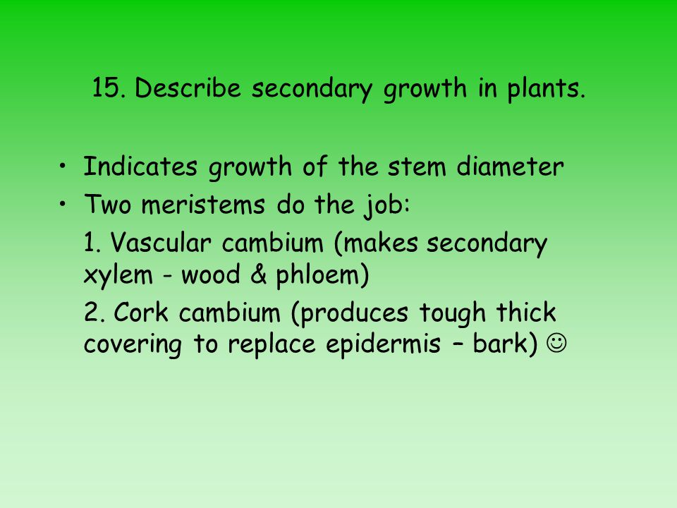 15. Describe secondary growth in plants.