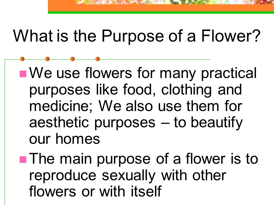 What is the Purpose of a Flower