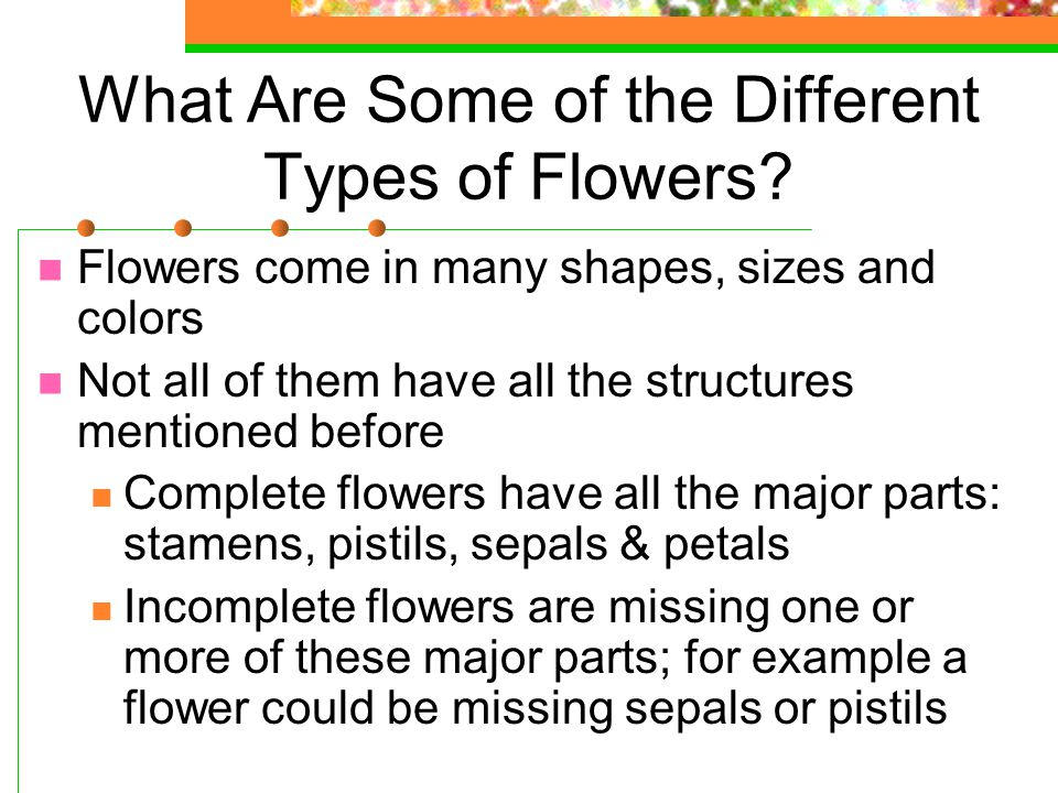 What Are Some of the Different Types of Flowers