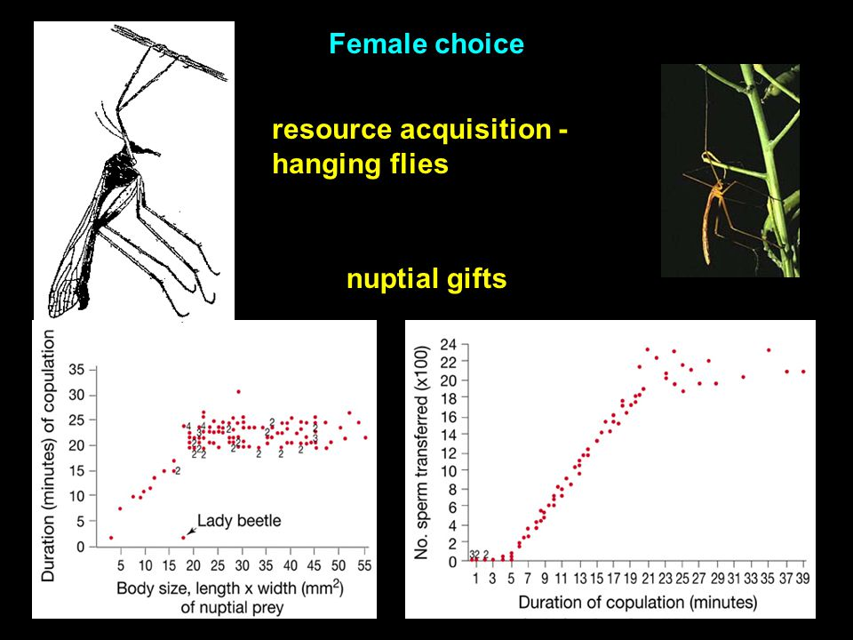 resource acquisition - hanging flies