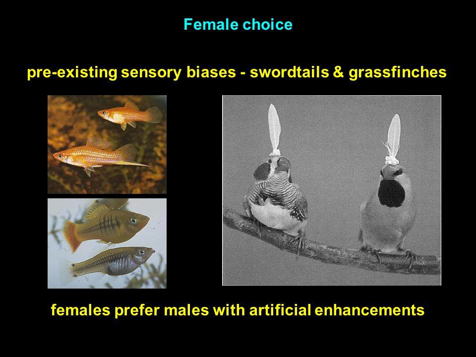 pre-existing sensory biases - swordtails & grassfinches