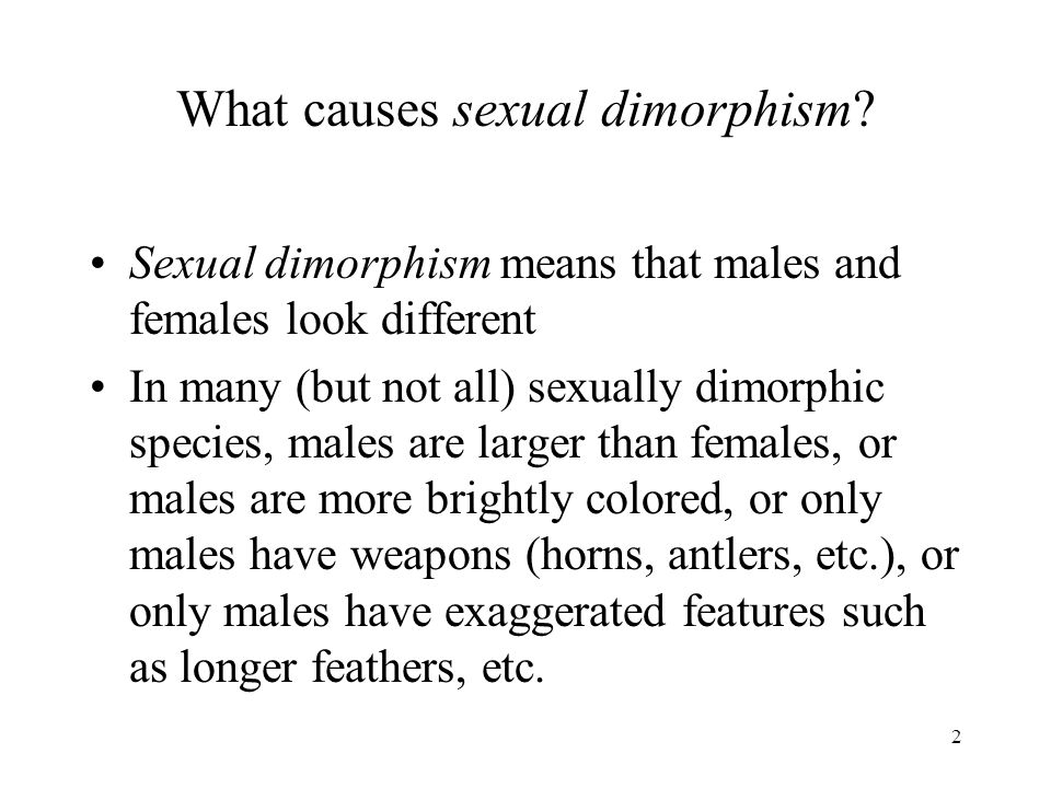 What causes sexual dimorphism