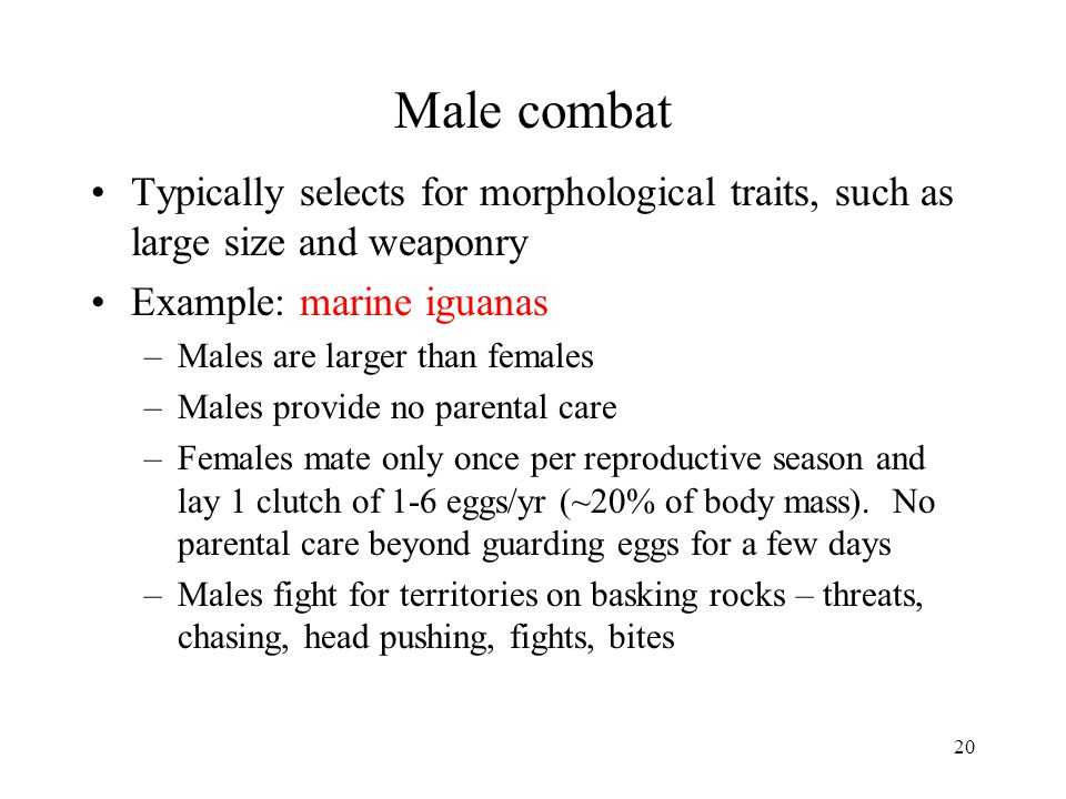 Male combat Typically selects for morphological traits, such as large size and weaponry. Example: marine iguanas.