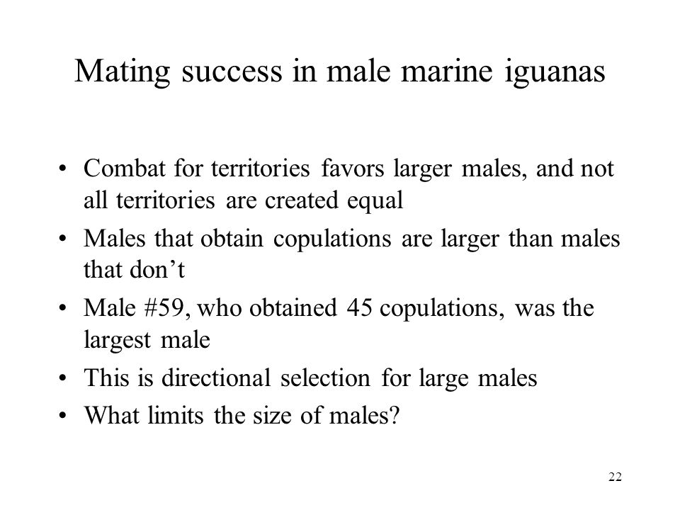 Mating success in male marine iguanas