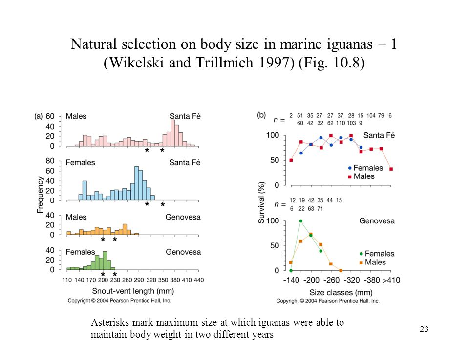 Natural selection on body size in marine iguanas – 1 (Wikelski and Trillmich 1997) (Fig. 10.8)