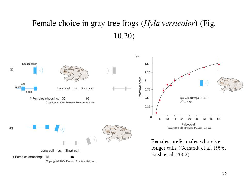 Female choice in gray tree frogs (Hyla versicolor) (Fig. 10.20)