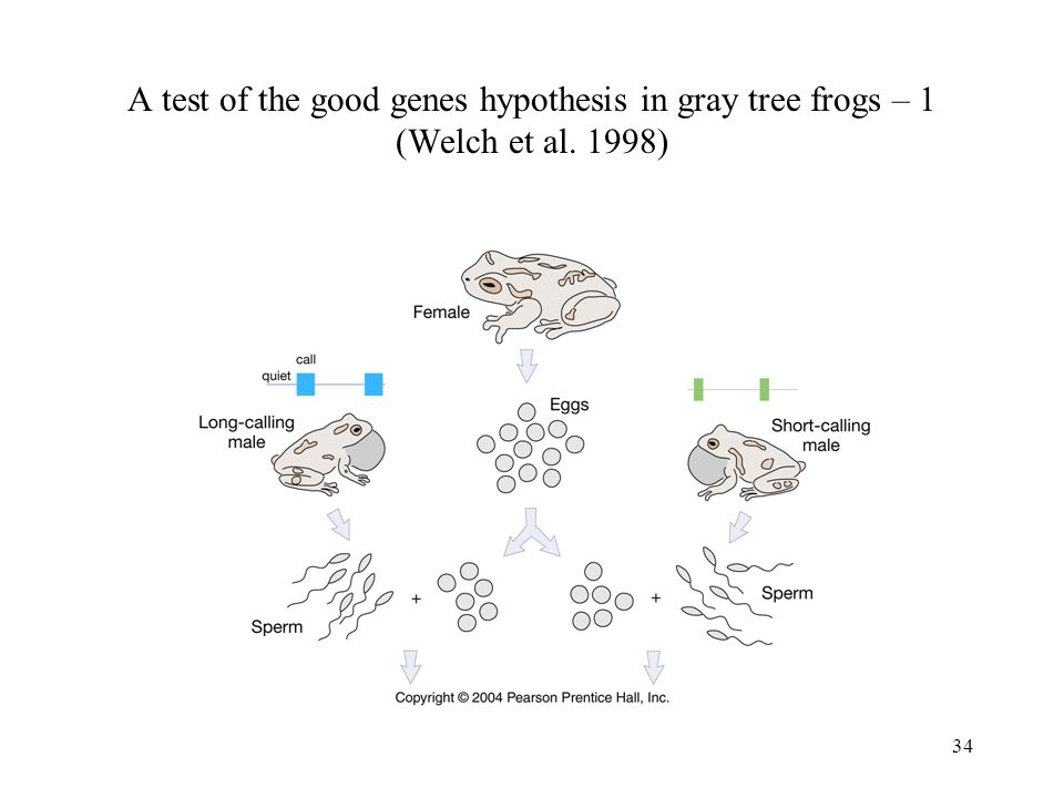 A test of the good genes hypothesis in gray tree frogs – 1 (Welch et al. 1998)