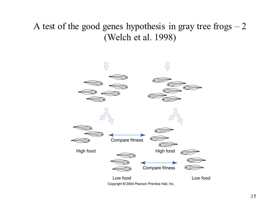 A test of the good genes hypothesis in gray tree frogs – 2 (Welch et al. 1998)