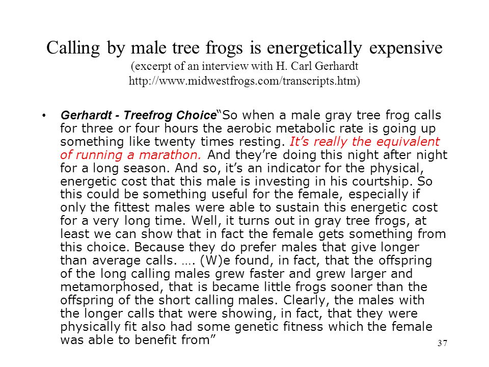 Calling by male tree frogs is energetically expensive (excerpt of an interview with H. Carl Gerhardt http://www.midwestfrogs.com/transcripts.htm)