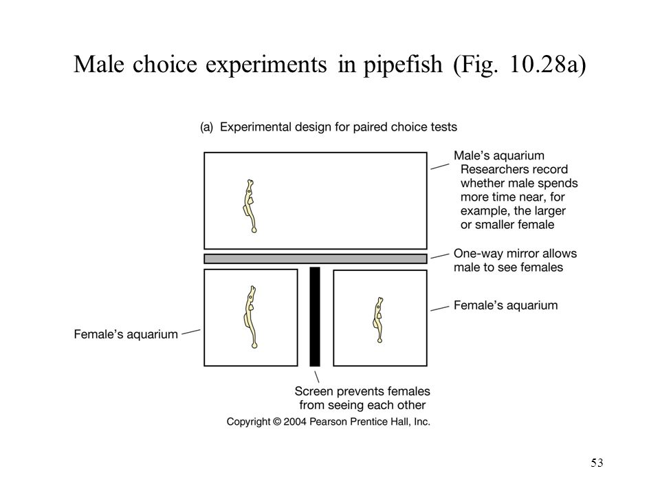Male choice experiments in pipefish (Fig. 10.28a)