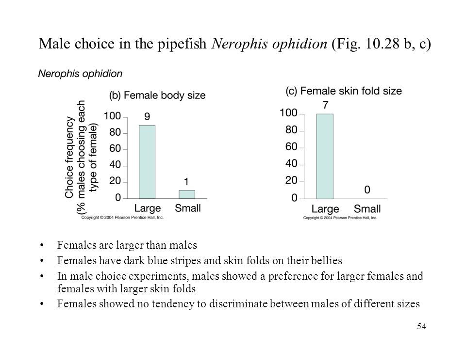 Male choice in the pipefish Nerophis ophidion (Fig. 10.28 b, c)